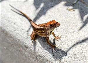 Lizard skins and bark bugs inspire energy saving materials