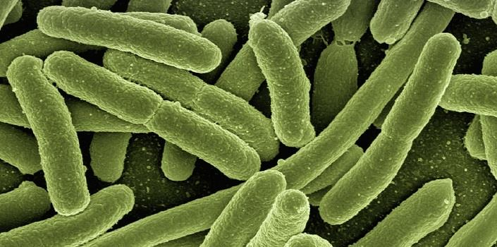 Do microbes control our mood?