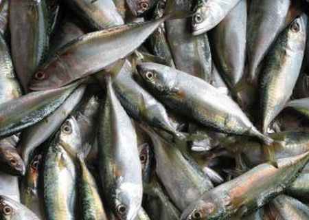 Turning Fish Waste Into Value Added Products Such As